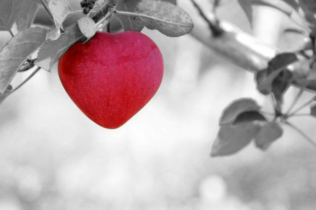 Free photo: Apple, Love, Heart - Free Image on Pixabay - 570965 (52063)