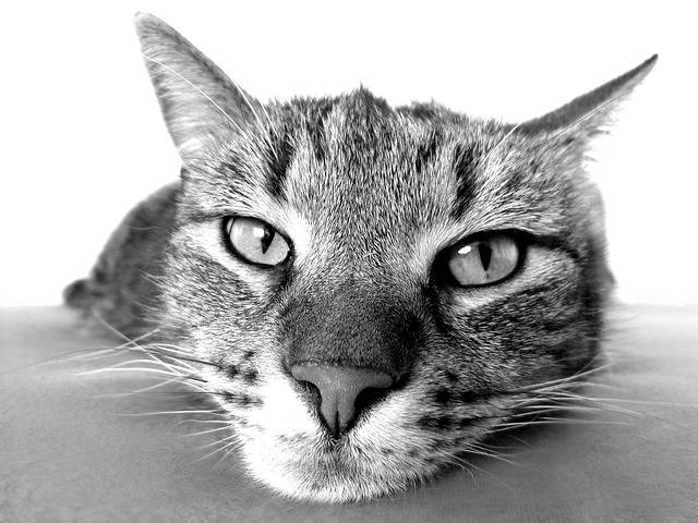 Free photo: Cat, Relax, Chill Out, Camacho - Free Image on Pixabay - 98359 (53478)