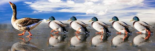Free photo: Animals, Ducks, Water Bird, Run - Free Image on Pixabay - 2000585 (57234)