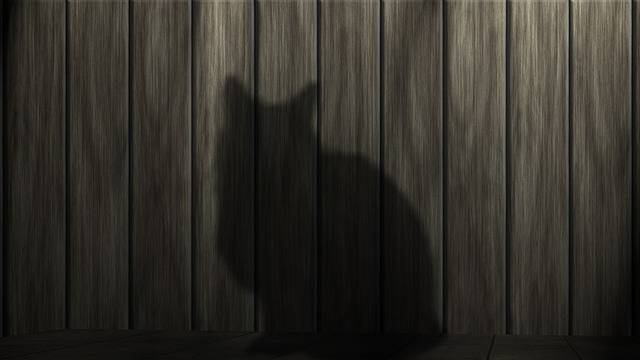 Free illustration: Cat, Black Cat, Power, Mieze, Black - Free Image on Pixabay - 233367 (57589)