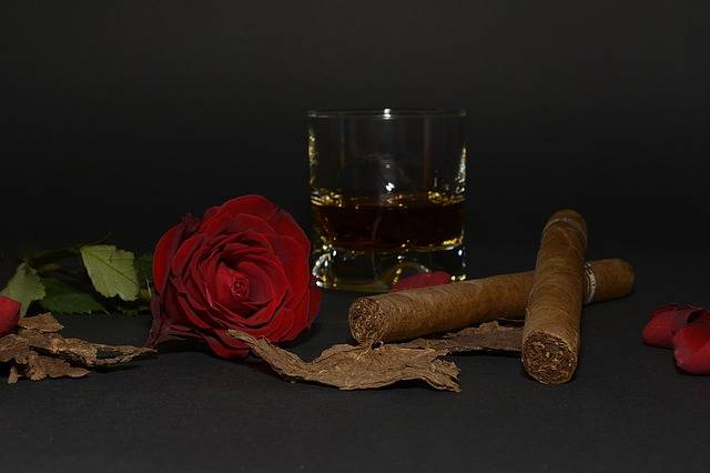 Free photo: Rose, Red Rose, Cigar - Free Image on Pixabay - 1473693 (59548)