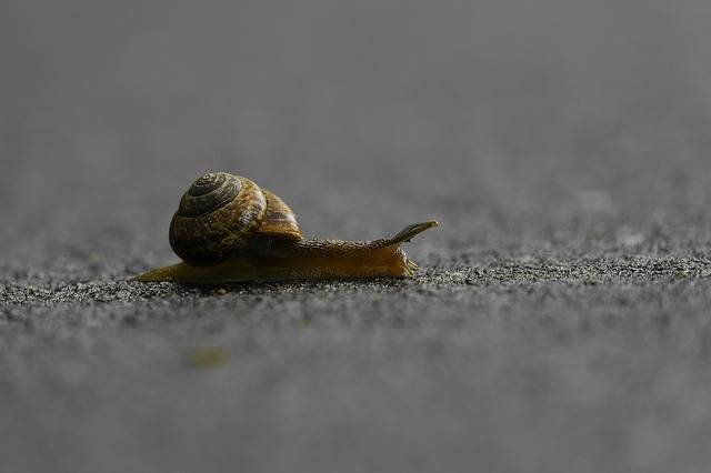 Free photo: Snail, Crossing, Slow, Speed - Free Image on Pixabay - 2708394 (59862)