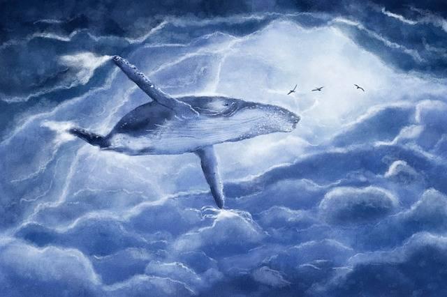 Free photo: The Whale, Vráskavec, Clouds - Free Image on Pixabay - 2630647 (60849)