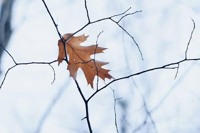 Free photo: Leaf, Winter, Fall, Dead Leaf - Free Image on Pixabay - 2893241 (61318)