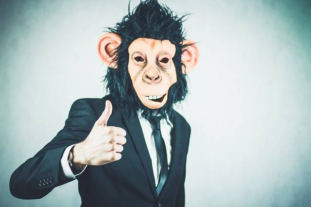 Free photo: Monkey, Application, Training - Free Image on Pixabay - 2710658 (62511)