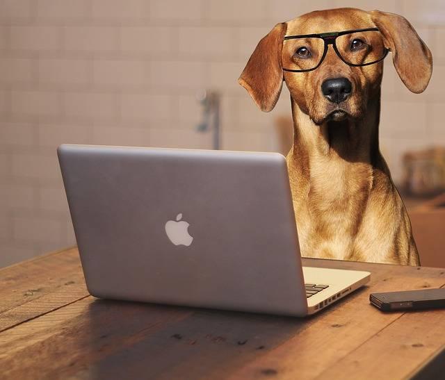 Free photo: Dog, Laptop, Computer, Glasses - Free Image on Pixabay - 2983021 (67787)