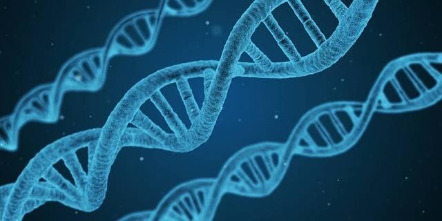 Free illustration: Dna, String, Biology, 3D - Free Image on Pixabay - 1811955 (68449)