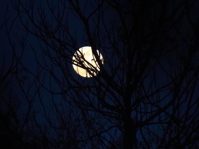 Free photo: Moon, Moonlit, Blue Sky, Night Sky - Free Image on Pixabay - 2348550 (80914)