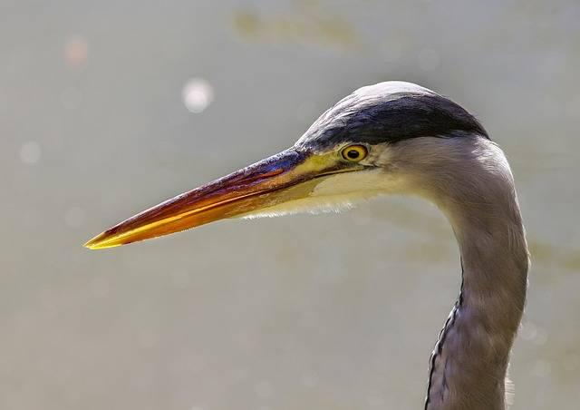 Free photo: Bird, Fauna, No Person, Nature - Free Image on Pixabay - 3257056 (80915)