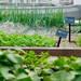 屋上菜園収穫体験プラン《1日1組限定》