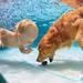 プールに行く前に絵本を読もう!幼児におすすめ気持ちが高ぶる絵本3選!
