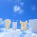 赤ちゃんの洗濯物は分ける?大人の洗濯物といつから一緒に洗って平気?おすすめの洗剤と掃除用の重曹6選