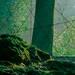 2017【愛知県】夏休みの大高緑地「ディノアドベンチャー名古屋」「イオンモール大高」はイベントが満載!子供と一緒にお出かけ情報