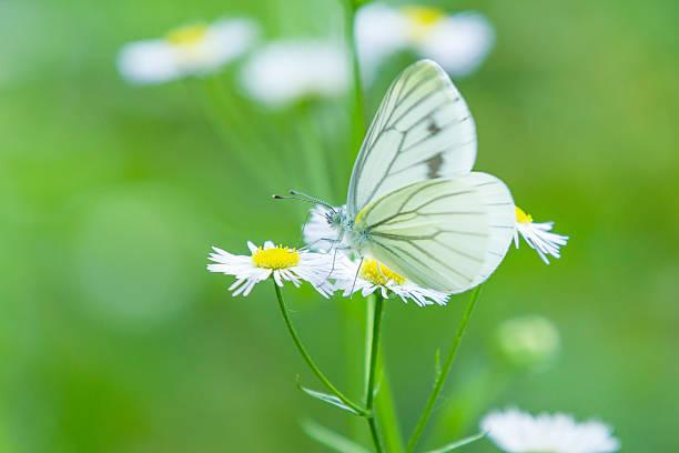 自然や季節をイメージする名前は美しいものが多いです♪