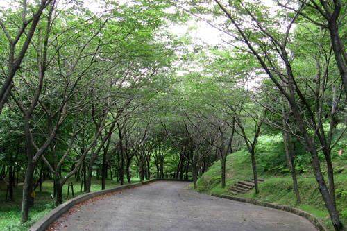 広葉の森・針葉の森