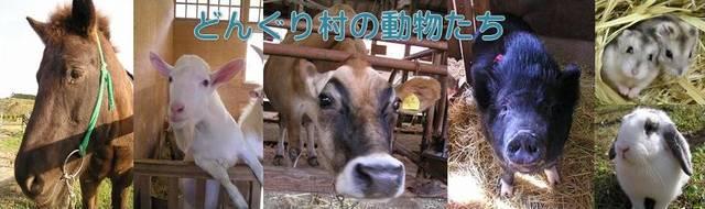 動物と遊ぶ どんぐり村/三瀬ルベール牧場 (22067)