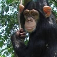 チンパンジー学習の森 - 阿蘇カドリー・ドミニオン (23990)