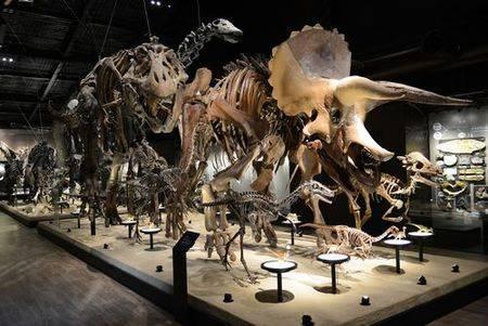 熊本県御船町【恐竜博物館】