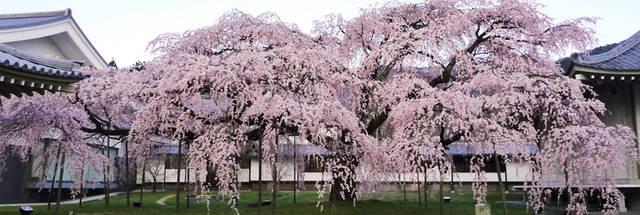 世界遺産 京都 醍醐寺 (25313)