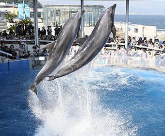 ショーのご紹介 | 大分マリーンパレス水族館「うみたまご」公式サイト | 大分観光 (29527)