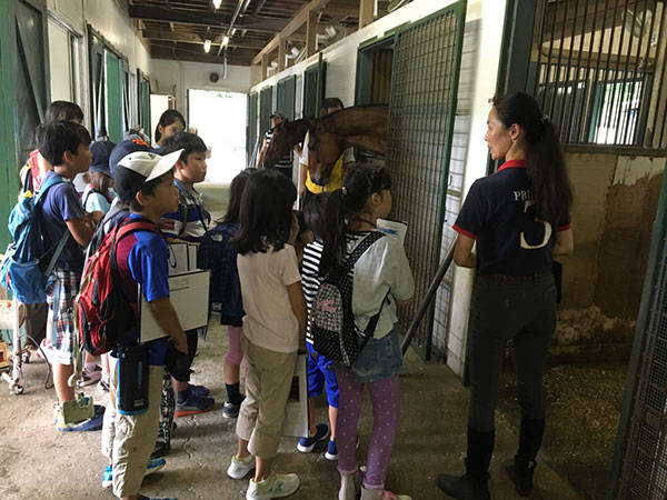 馬の博物館 (43786)