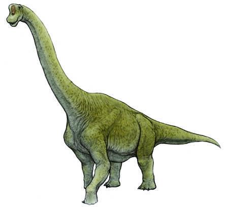 川崎悟司イラスト集・ブラキオサウルス(Brachiosaurus) (70341)