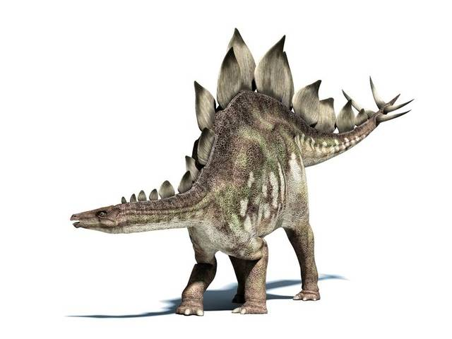 ステゴサウルス(Stegosaurus) | 恐竜図鑑 (70342)