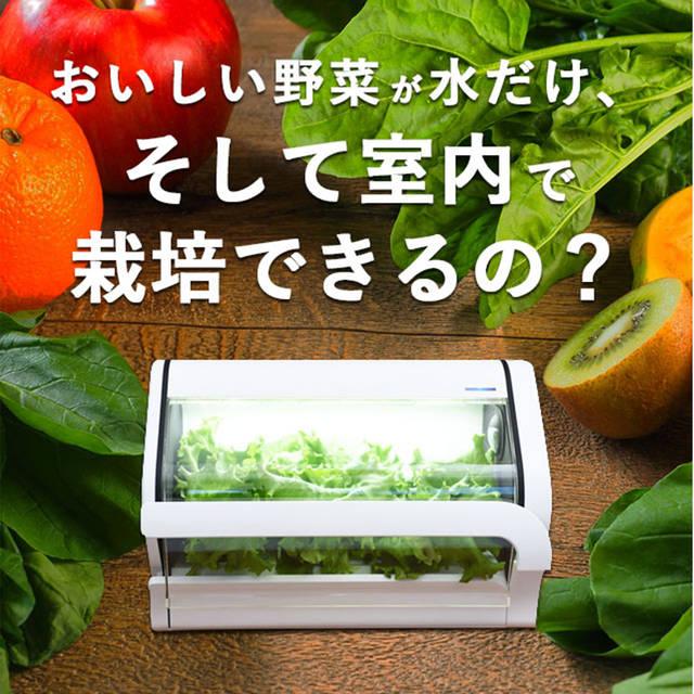 やさいものがたり商品詳細ページ | 沖縄CLIPマルシェ (74337)
