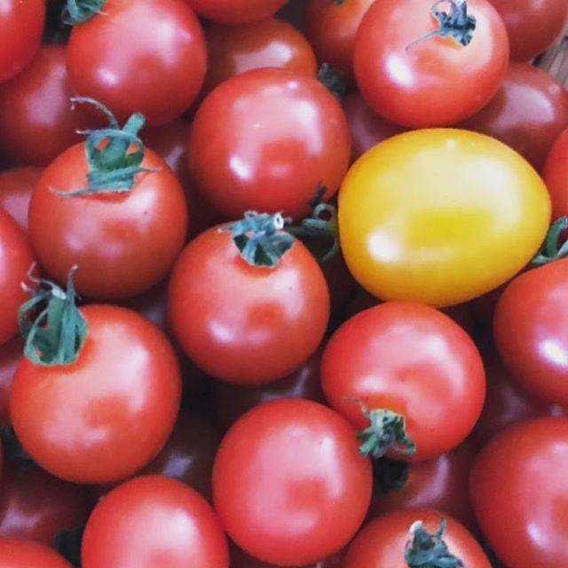 """しんちゃん on Instagram: """"接写するとホントにおもしろいNo.392プチトマト(Petit tomatoes)#アート #デザイン #写真 #プチトマト#art #design#photo#petit #tomatoes"""" (97819)"""