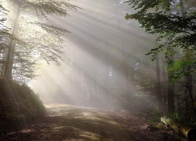 Free photo: Rise, Morning, Fog, Sunbeam, Forest - Free Image on Pixabay - 1789903 (17490)