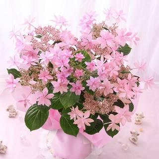 Amazon|BunBunBee 母の日 アジサイ鉢・華やかな「ダンスパーティ・ピンク」 (91100)