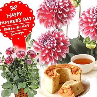 Amazon | 母の日ギフト 選べる鉢植え 花とスイーツ フラワーギフト (ダリア・タンピコ) (91103)