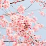 【冬が終わっても乾燥は続く】春の肌トラブルを防ぐためにできること