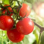 トマトで美しくなることができるの?トマトの効果5選をご紹介◎