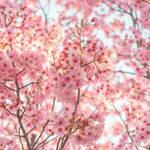 【2019年春にくる色はコレ!!】春コスメのトレンドカラーは??