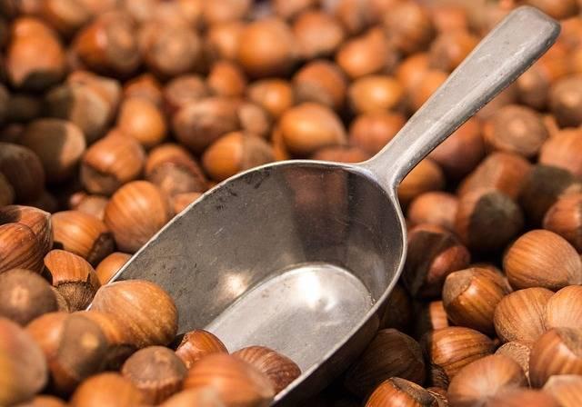 Free photo: Hazelnuts, Nuts, Brown, Shells - Free Image on Pixabay - 264824 (1676)