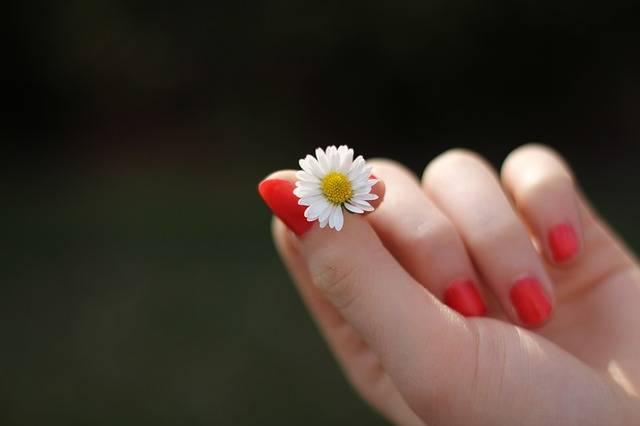 Free photo: Hand, Daisy, Flower, Finger - Free Image on Pixabay - 302802 (1850)