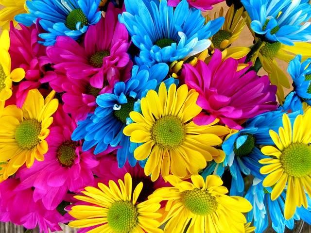 Free photo: Daisies, Daisy, Flowers, Bloom - Free Image on Pixabay - 54663 (3726)