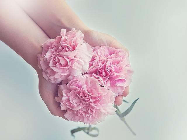 Free photo: Cloves, Flowers, Pink - Free Image on Pixabay - 1367675 (3735)