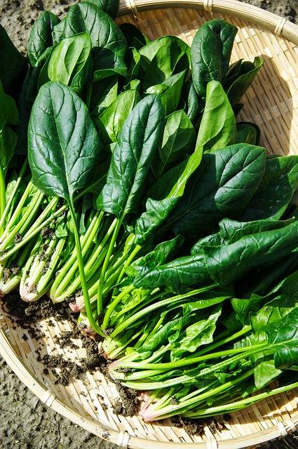 Free photo: Vegetables, Spinach, Green - Free Image on Pixabay - 1125420 (3807)