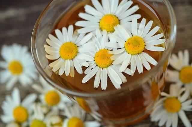 Free photo: Chamomile, Chamomile Blossoms - Free Image on Pixabay - 829220 (5782)