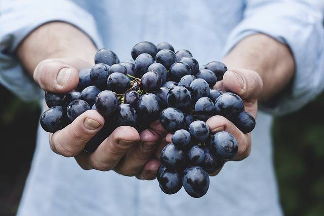 Free photo: Grapes, Bunch, Fruit, Person - Free Image on Pixabay - 690230 (5911)