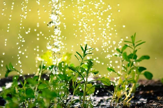 Free photo: Drop Of Water, Water The Plants - Free Image on Pixabay - 2342870 (18997)
