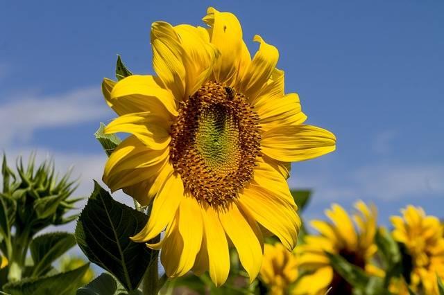 Free photo: Nature, Flower, Flora, Summer - Free Image on Pixabay - 3279156 (23667)