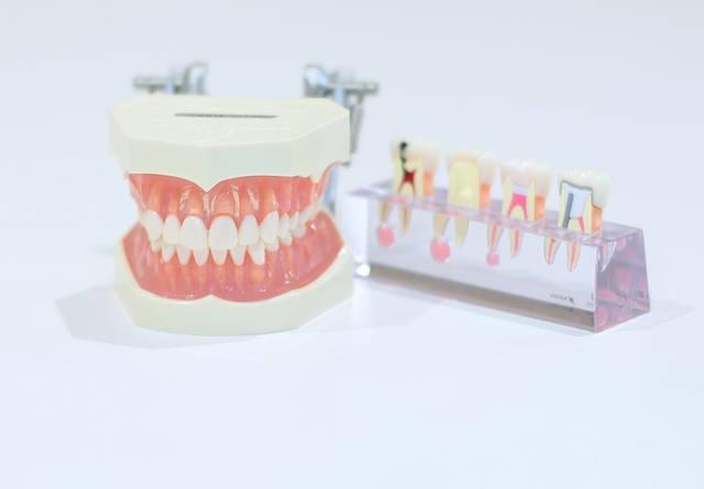 歯科1|写真素材なら「写真AC」無料(フリー)ダウンロードOK (162)