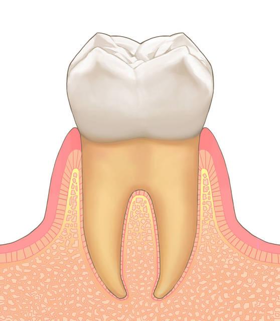 歯科素材 歯科イラストなら 歯科素材屋さん | フリー素材 イラスト素材 無料 ダウンロード (893)
