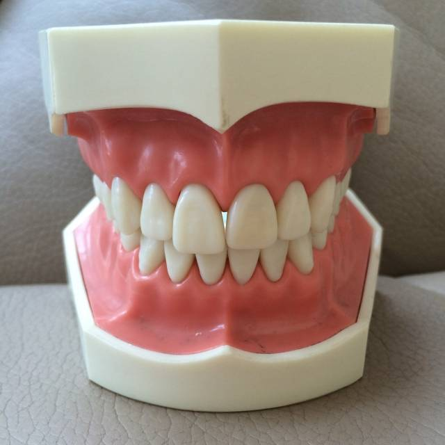 歯|写真素材なら「写真AC」無料(フリー)ダウンロードOK (1873)