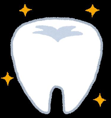 歯のイラスト「健康的な歯」 | かわいいフリー素材集 いらすとや (5744)