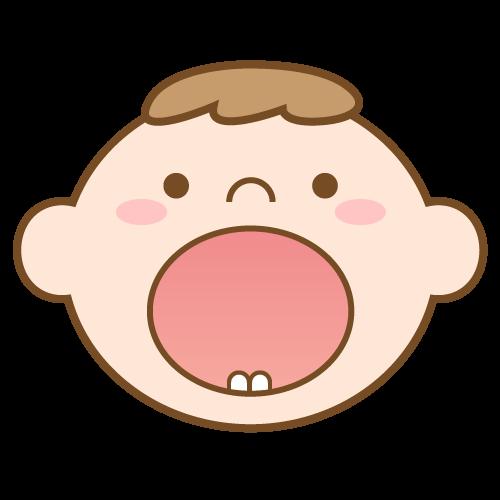 乳歯(6か月)|イラストNo.1677【歯科素材.com】 (8242)