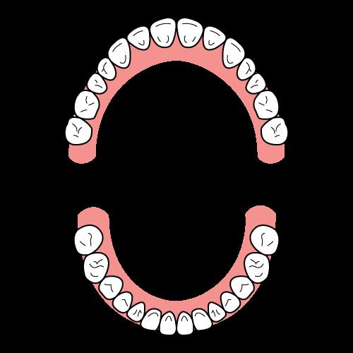 歯列弓の形(健康に発育したU字型)|イラストNo.2123【歯科素材.com】 (9783)
